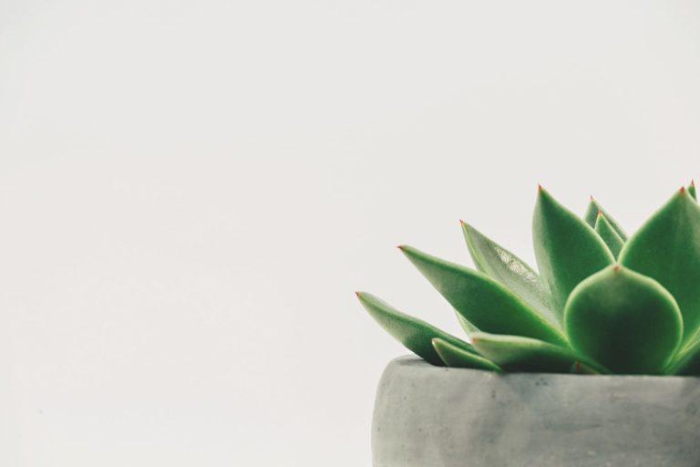 malta-buy-plants